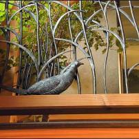 Pheasant in Grass Rail